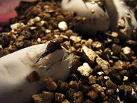 Hatching snake