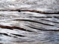 rotten wood 1