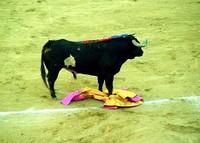 The Bull Wins