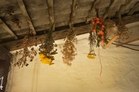 dry flowers and herbs