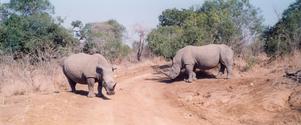 south-afrika/swasiland 2