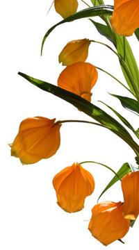 sunny orange flowers 1