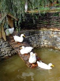 duck duck duck :)