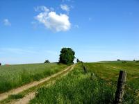 lonley_road_tree 1