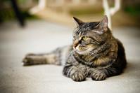 Willow Cat 9