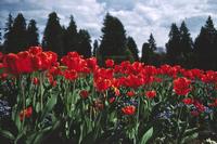 Flowers in Stanley Park 8