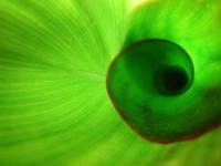 Inside a curled leaf