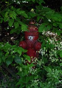Hidden Hydrant