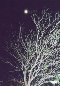 Druid Moon 02