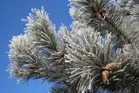 heavy frost 5