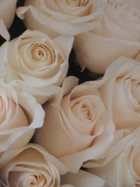 Roses roses roses! 1