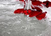 wet petals