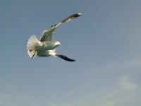 Bird flying 2