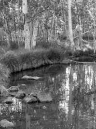 Cedar Stream