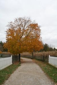 Fall path 2