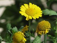 Flowers - Macro 303