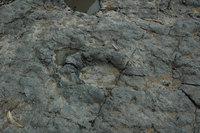 dinosaur_track