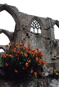 floral abbey