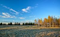 Heath Landscape in Autumn