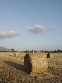 Tuscany (summer) 2
