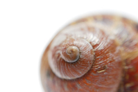 Snail Shell spiral shallow DOF