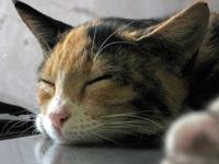 cute cat fell asleep