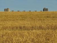 Living in Fields