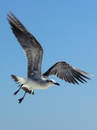 Sea Gulls 4