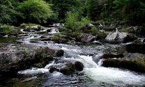 Smokie Mountain Stream