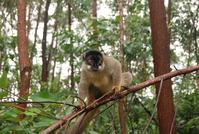 Lemur of Madagascar 2