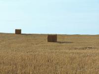 campo en verano, field in summer 1