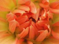 Flower grainy