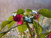 Spring rain 1