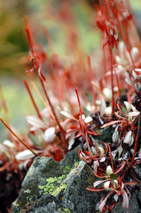 Mountain Flora 2