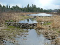 beaver dam 1
