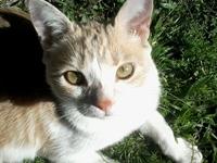 Spontaneous cat 1