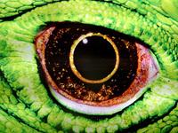 Painel Olho