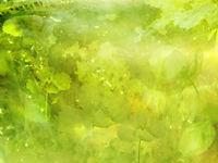 green flower free photos