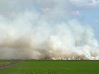 Grassfire 411