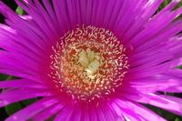 flower on Elba 3
