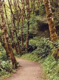 Path To Fern Valley