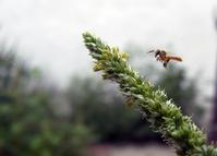 finding Pollen