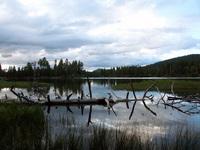 Log in the Lake