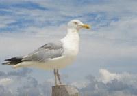 Jersey Bird