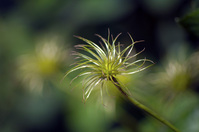 Spiral green bloom