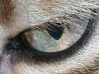 Purdys watchful eye