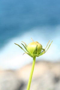 croatian plant 1
