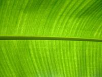 Sun palmtree