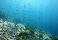 Underwater landscape 4