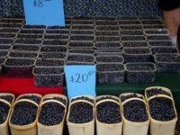 Farm Market 8